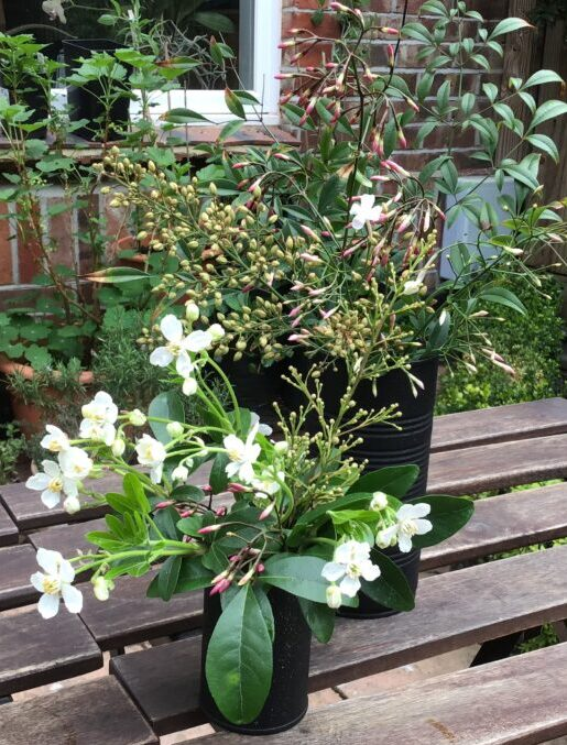 Upcycles tins as flowerpots in the garden